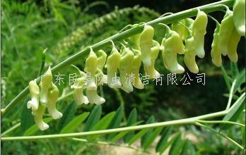杀虫灭鼠植物的开发与利用